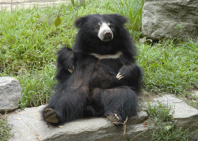 SlothBearRelaxing_02